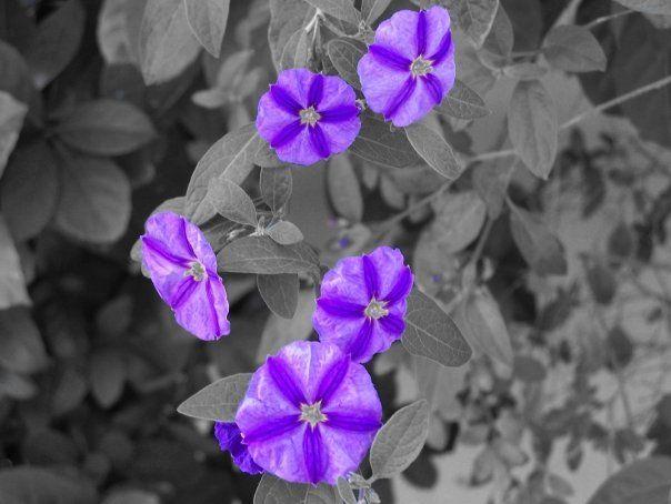blomm