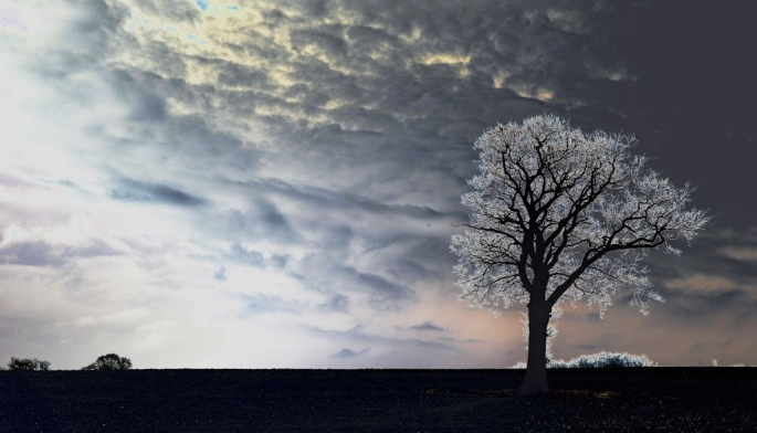 tree and sun (1)